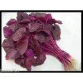 Red Amaranth
