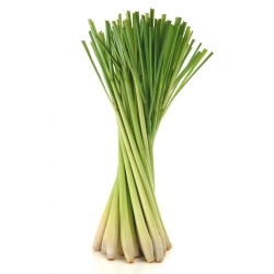 Lemon Grass (Frozen)
