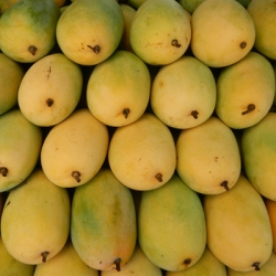 Mango - Riped  <WHOLE>  < Sweet ><IMPORTED OF THAILAND> <  deshi  taste  . now is season > < Fluctuates in different season >