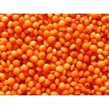 Masoor Dal / Red Lentils (Small Grain) - Peeled, Cleaned