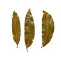 Bay Leaf (Tejpata)