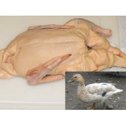 Duck whole (Price will vary on weight)