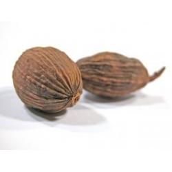 Jaiphal (Meghunath / Nutmeg)