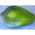 PAPAYA FRESH <GREEN><OKINAWA .JAPAN><FLUCTUATES IN DIFFERENT  SEASON>