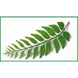 Curry Leaf / Pata