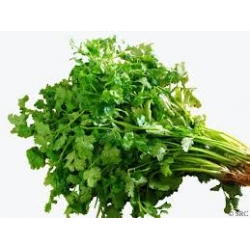Coriander Leaf,  Dhania Pata , Green, ,Fresh ,Not frozen,Product in okinawa ,orgin in bangladesh, Deshi flavou
