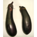 Eggplant (Begun) >> Fresh Saitama Japan